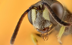 Picture macro, background, Wasp