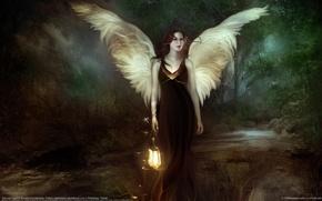 Wallpaper fireflies, lantern, wings