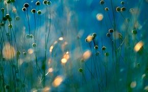 Picture field, light, plant, meadow, Blik