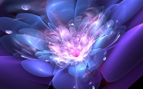 Picture flower, drops, line, abstraction, graphics, fractal