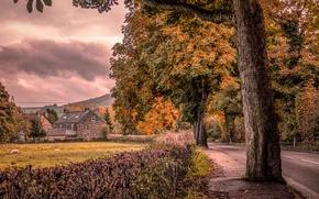 Picture road, autumn, trees, England, home, the bushes, Bamford