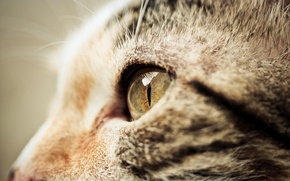 Picture cat, macro, muzzle, face, profile, cat
