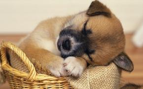 Picture basket, baby., Sleep