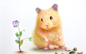 Picture flower, hamster, shell