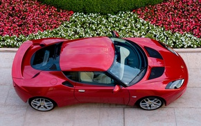 Picture Lotus, flowerbed, Evora, the view from the top