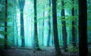 Picture greens, forest, light, trees, fog, by Robin de Blanche, Glimpse