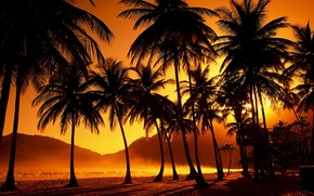 Picture sunset, tropics, palm trees, the evening