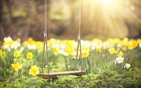 Wallpaper greens, the sun, rays, flowers, swing, spring, blur, Daffodils