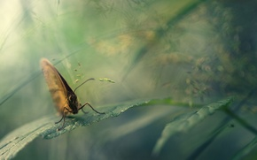 Picture macro, nature, butterfly, leaf