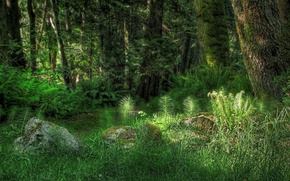 Wallpaper trees, grass, light, forest