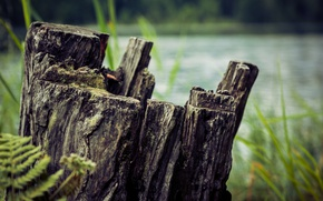 Picture macro, landscape, nature, stump, stump