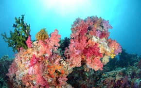 Wallpaper sea, color, water, fish, corals, underwater world