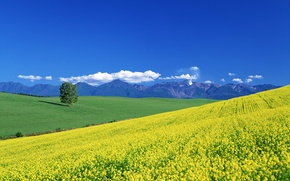 Picture summer, clouds, mountains, tree, valley, meadow