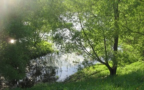 Picture greens, forest, summer, grass, water, the sun, rays, trees, green, pond