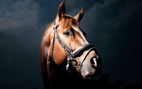 Picture horse, horse, black background