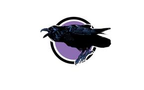 Wallpaper bird, beak, Raven