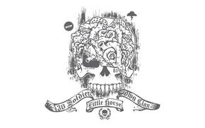 Picture skull, white background, brains