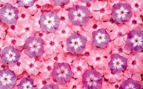 Wallpaper flowers, carpet, petals, aroma