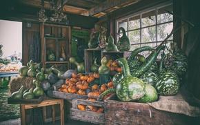 Wallpaper pumpkin, farm, harvest, market