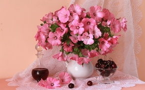 Picture pink, cherry, lavatera