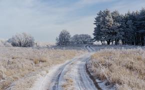 Wallpaper frost, road, field, winter