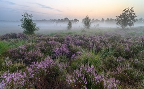 Picture field, summer, flowers, fog
