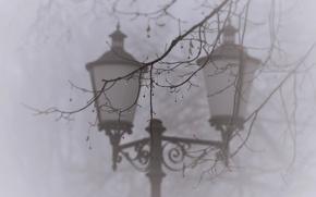 Picture drops, macro, nature, fog, tree, branch, lantern