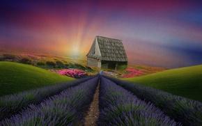Picture landscape, flowers, house, hills, vegetation, meadows