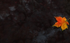 Picture Water, Autumn, Maple leaf, Maple