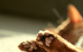 Picture paws, Cat, blur