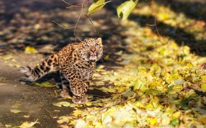 Picture branch, fluffy, leopard, kitty