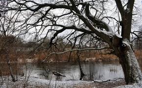 Picture winter, snow, river, tree