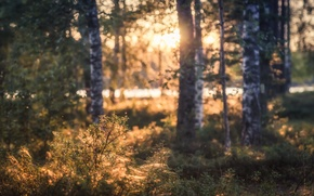 Picture forest, light, trees, landscape, nature