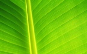 Wallpaper sheet, greens, line