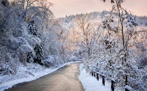 Picture winter, road, forest, the sky, snow, trees, landscape, nature, white, forest, road, sky, trees, nature, ...