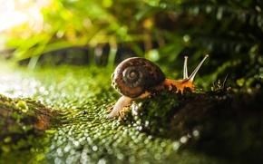 Picture bokeh, macro, grass, light, snail