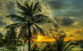 Picture palm trees, The Maldives, coast, beach, sand, sea, the sky, tropics, clouds, sunset