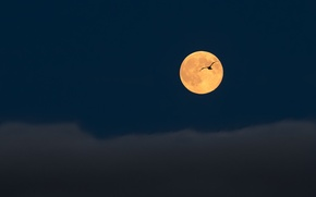 Picture the sky, flight, clouds, bird, the moon, Night, the full moon