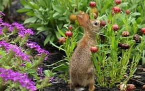 Picture flowers, garden, rabbit