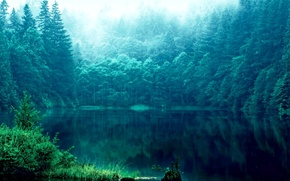 Picture grass, reflection, trees, lake, Forest