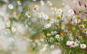 Wallpaper summer, flowers, nature