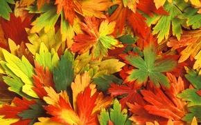 Picture autumn, leaves, Kaleidoscope