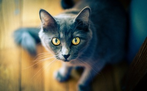 Picture eyes, cat, table, tree, bokeh