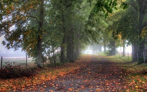 Picture road, autumn, trees, fog, fence, alley