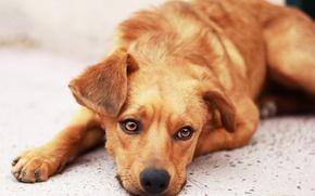 Wallpaper sadness, hope, dog, waiting