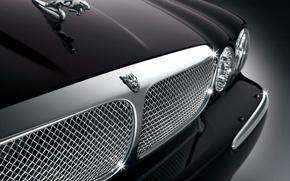 Wallpaper Jaguar, grille, JAGUAR, logo