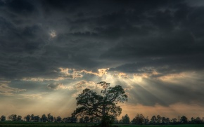 Picture field, clouds, light, trees