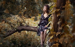 Picture forest, girl, tree, model, portrait, branch, hairstyle, light, red, beautiful, the beauty, sitting, nature, beauty, …