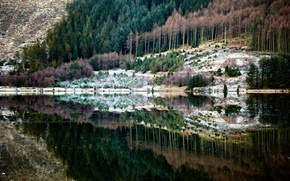 Picture forest, nature, reflection, river