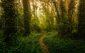 Picture forest, light, trees, nature, trail, rosteniya